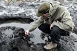 Британиядагы толкун 7 миң жыл илгерки токойду алып чыкты