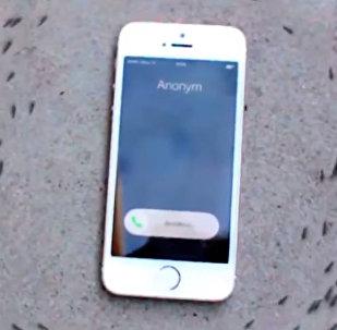 Десятки муравьев танцуют вокруг iPhone — видео покоряет Интернет