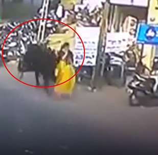 В Индии бык напал на женщину, подбросив ее в воздух — шокирующее видео