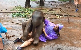 В Таиланде слоненок извалял туристку в грязи. Ей понравилось