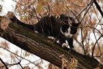 Кот на дереве. Архивное фото