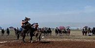 Конь ударом копыта выбил всадника из седла — зрелищное видео из Сузака
