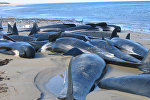 Океан жээгиндеги дельфиндердин өлүктөрү. Архив