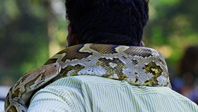 Заклинатель змей с питоном на шее. Архивное фото