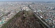 Красота Ботанического сада Бишкека за две минуты — аэросъемка
