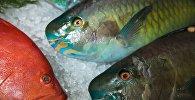 Рыба Групер (слева) и рыба-попугай. Архивное фото
