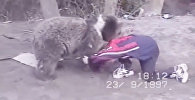 Соцсети восхитила схватка 9-летнего Нурмагомедова с медвежонком. Видео