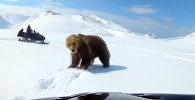 Медведь атаковал рыбака, гонявшегося за ним на снегоходе. Видео