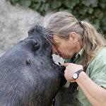 Венадагы Шенбурн зоопаркынын кызматкери деңиз арстанынын саламаттыгын текшерип жатат
