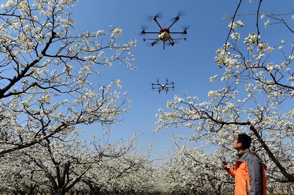 Использование дронов для садоводства в округе Цанчжоу