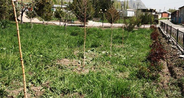 Посадка 80 саженцев деревьев в Оше