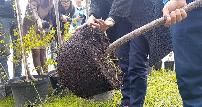 МП Зеленхоз при мэрии Бишкека выращивает собственные саженцы