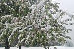 В Аксыйском районе 17-апреля выпал снег