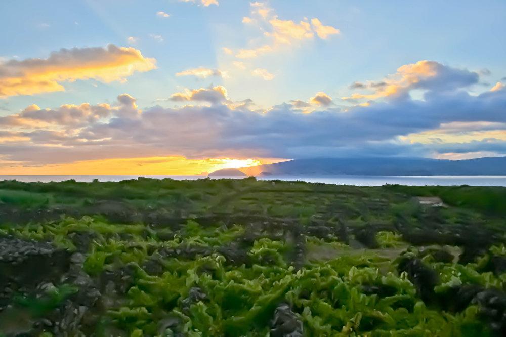 Объекты Всемирного наследия ЮНЕСКО — винодельческий ландшафт острова Пику