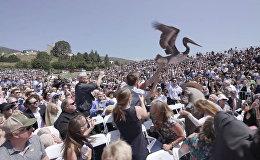 АКШда бүтүрүү кечеси пеликандардын айынан болбой кала жаздады. Видео