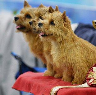 Выставка собак Евразия-2018