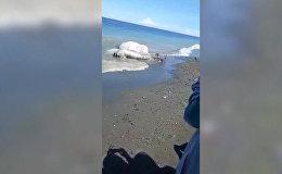 Похоже на инопланетное — на берег Филиппин вынесло загадочное существо. Фото