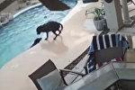 Не оставил в беде — пес нырнул в бассейн, чтобы спасти тонущего сородича