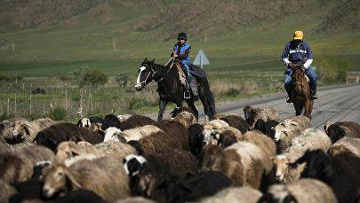 Чабаны пасут овец. Архивное фото