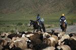 Дети на лошадях пасут овец в Таласской области. Архивное фото