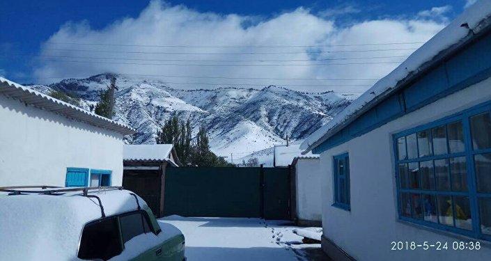 В селе Сан-Таш Тюпского района Иссык-Кульской области в ночь с 23 на 24 мая выпал снег