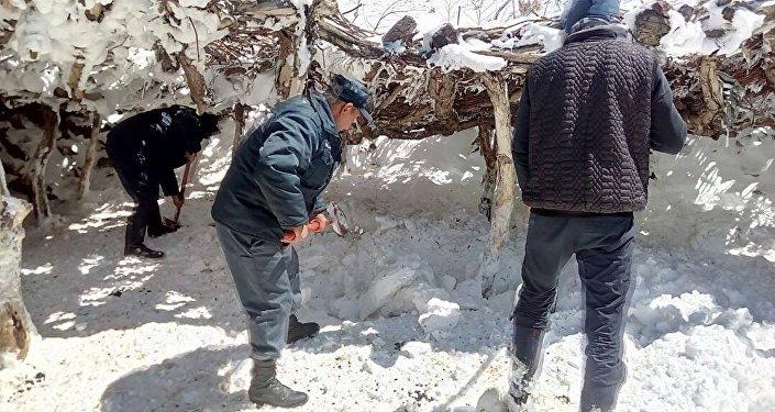 Двести овец не выдержали холода на участке Уч-Эмчек Ат-Башинского района Нарынской области