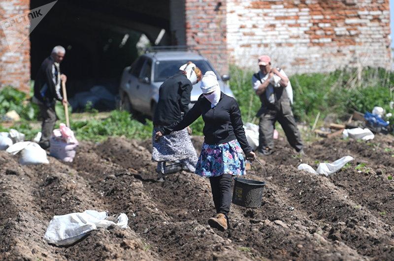 Жители Кыргызского поселка в Заокском районе Тульской области в Российской Федерации работают на поле