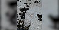 Овцы замерзали на ходу, а лошади срывались со скал — видео с пастбищ КР