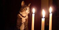 Кошка рядом со свечами во время отключения электричества. Архивное фото