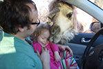 Веселое видео чуть не закончилось плачевно — о верблюде и маленькой девочке