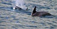 Дельфиндер. Архив