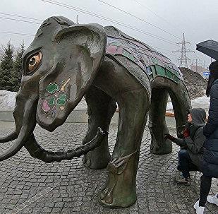 Увидеть в Самаре слона и загадать желание