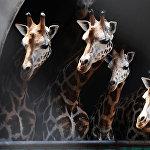 Зоопарк Калькутты (Индия)