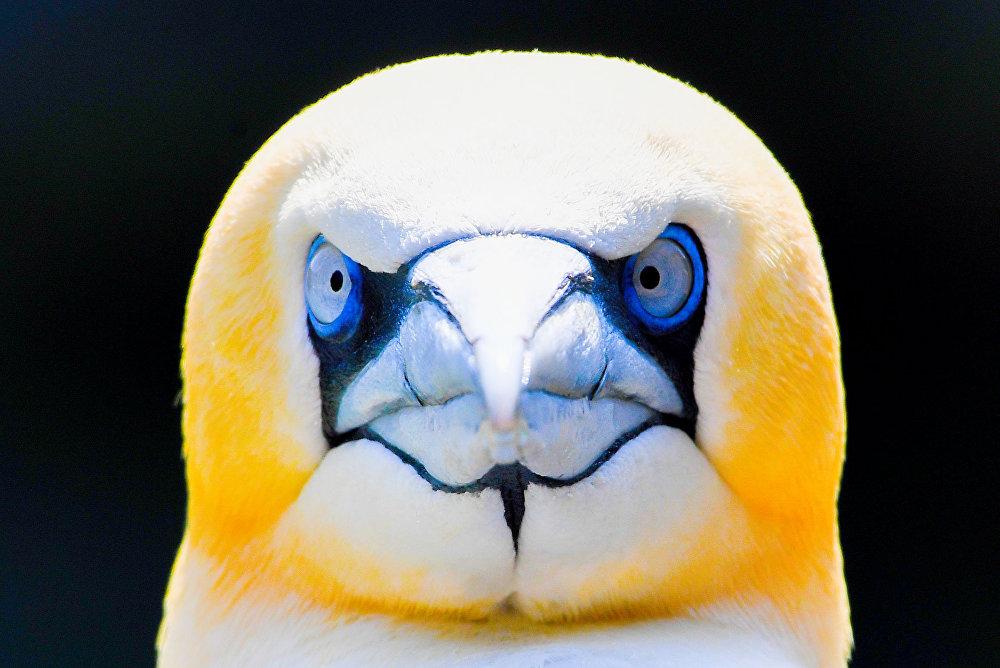 Германиянын түндүгүндө жайгашкан Бремерхавен зоопаркындагы суу канаттуусу