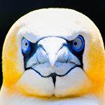 Зоопарк Бремерхавена на севере Германии