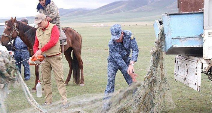 Соң-Көл көлүнө жасалма жол менен коё берилген 2,5 миллион чабак браконьерлер тарабынан аёсуз кырылып жатканын Мамлекеттик экологиялык-техникалык инспекциясы билдирди