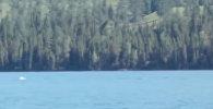 Это морское чудище? Загадочное существо сняли на видео в Китае