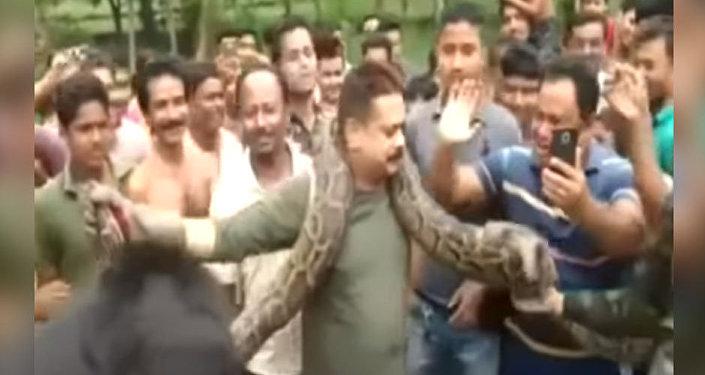 Селфи с питоном едва не обернулось гибелью лесничего в Индии — видео