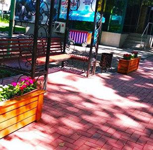 Сотрудники муниципального предприятия Бишкекзеленхоз установили на проспекте Эркиндик вазоны с цветами