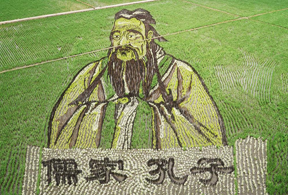 фото рисовые поля