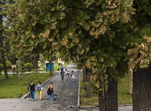 Поражение дубов минирующим пилильщиком  в Бишкеке