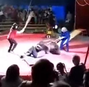 Медведь на глазах людей напал на дрессировщика. Видео