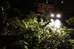 Поваленное дерево из-за урагана. Архивное фото