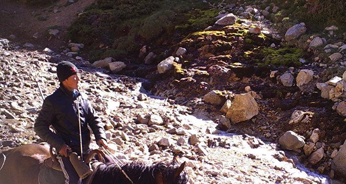 Талас облусундагы кайтарууга алынган корукта мылтыкчан киши фотокапканга түшүп калды