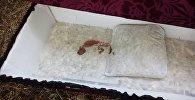 В центре Бишкека выбросили гроб