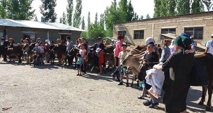 Малоимущим семьям в Аксы подарили по корове