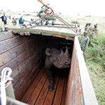 Найробинин (Кения) улуттук паркында башка жакка көчүрүүгө даярдалган керикКытайдын армиясы. Гонконгдогу авиабазада өткөн машыгуу
