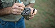 Обрезанные рожки носорога. Архивное фото