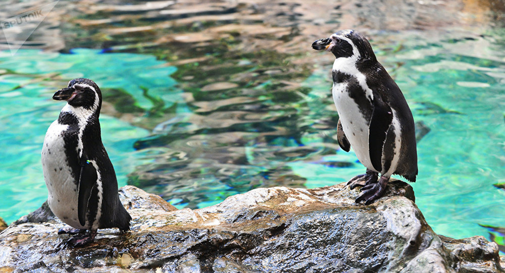 Пингвиндер. Архив