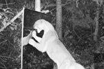 Как животные в лесу реагируют на отражение в зеркале. Видео
